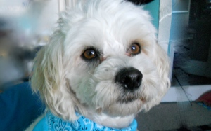 Freddie Parker WesterfieldCanine Dog Therapist
