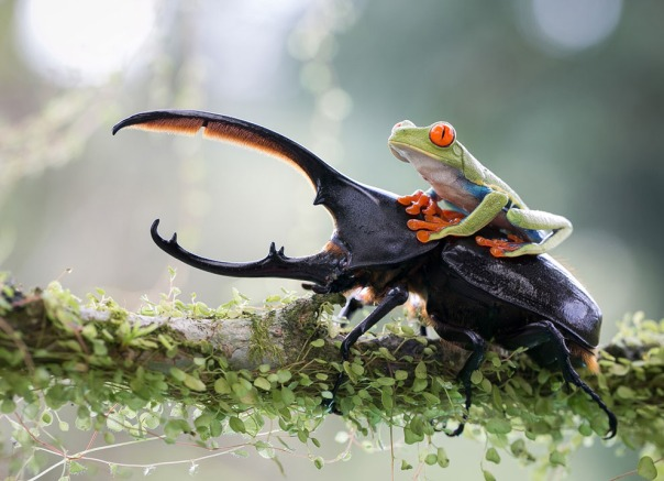 The knight and his steed, a tropical capture in Costa Rica. (© Nicolas Reusens, 2014 Sony World Photography Awards)