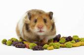 "Hammy Hamster sez: ""Nuts?, Did I hear NUTS!)"