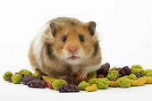 "Hammy Hamster sez: ""Nuts?, Did I hear NUTS!)"