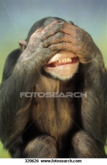 chimpanzee-covering-his_~320626