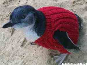 s-PENGUIN-IN-TINY-SWEATER-480x360