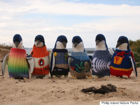 s-PENGUINS-IN-TINY-SWEATERS-480x360