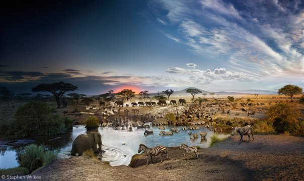 Serengeti National Park, Tanzania, Day to Night, 2015. Courtesy of Stephen Wilkes/National Geographic