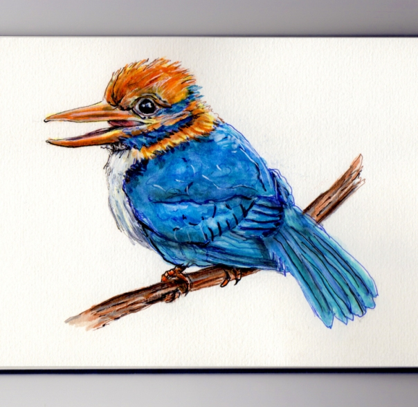 Watercolor by Charlie O', Kingfisher Bird