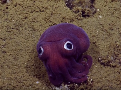 squid-a368418e138de40e19da6a204f5a12a278df598b-s800-c85